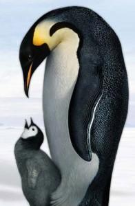 Un bello ejemplo animal para los humanos, y sin regalo del día del padre.