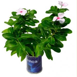 Flores naturales enlatadas: un regalo de lo más original para el Día de la Madre